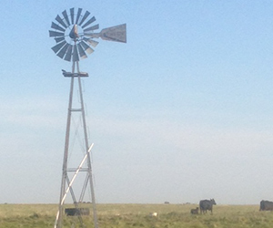 Windmill in pasture